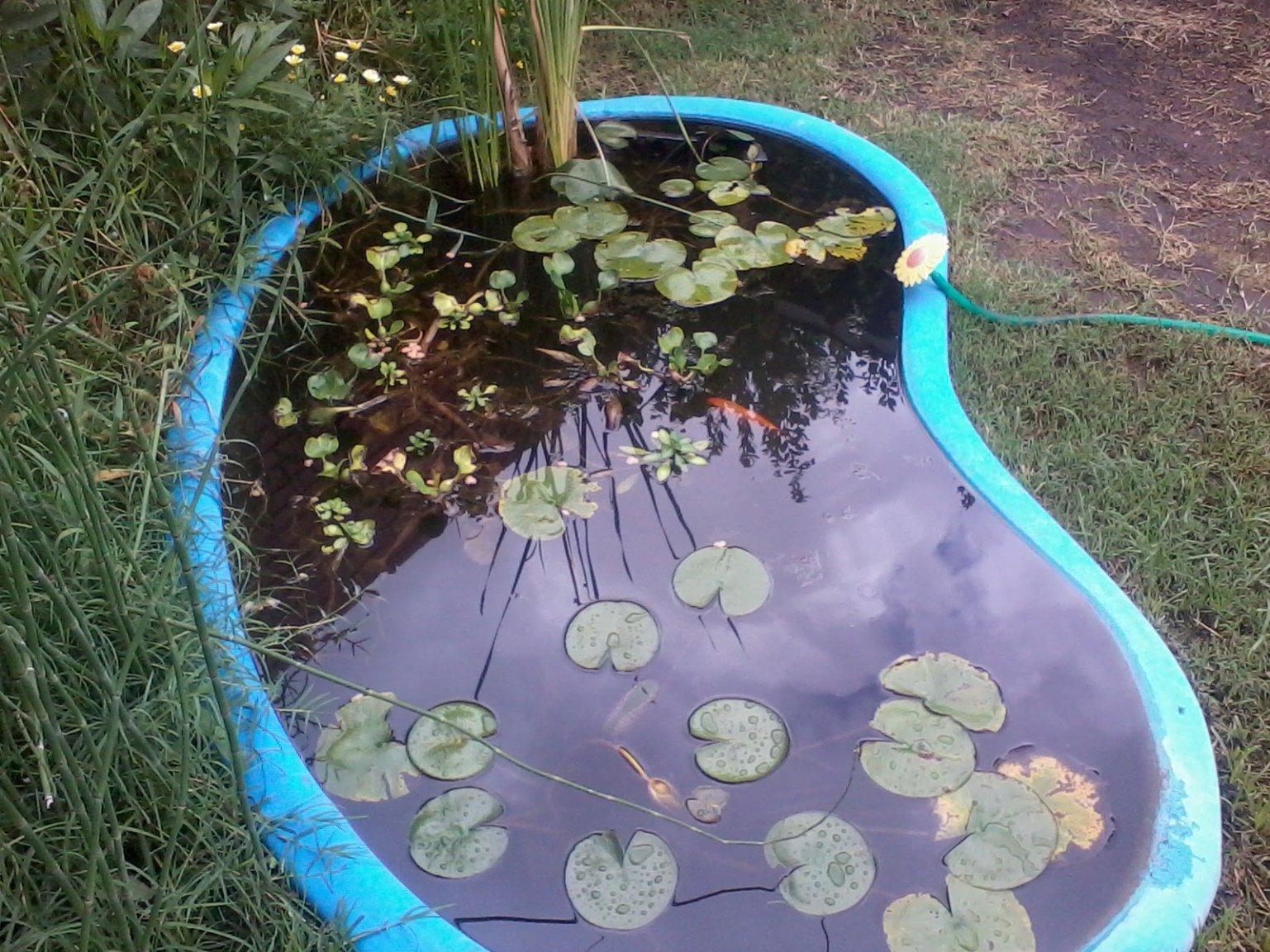 Como hacer una pileta de agua casera con maravillosas ideas for Fuentes de agua con peces