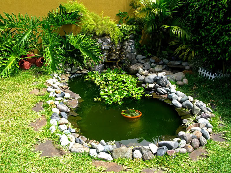 Como hacer una pileta de agua casera con maravillosas ideas for Como hacer una granja de peces