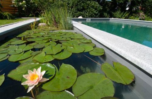 Como hacer una piscina ecol gica paso a paso sencillo for Como hacer un filtro para piscina
